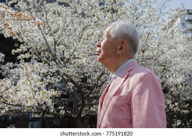 Old man watching cherry blossoms