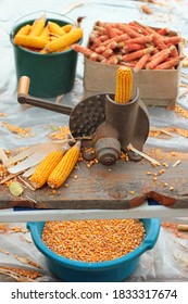Old manual corn shucker, stripping and shelling of corn cobs