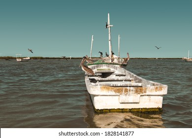 Old mexican fishing boat with pelicans, on the Lagartos river