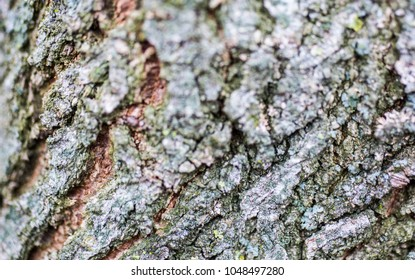 Old mildew bark texture with moss ash and horisontal lines. Natural tree background in the forest. Ecological green photo.
