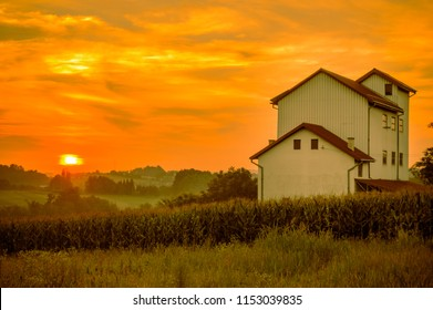 Old mill,village. Corn field. Summer sunset landscape. Countryside  evening. Serbia, Europe.