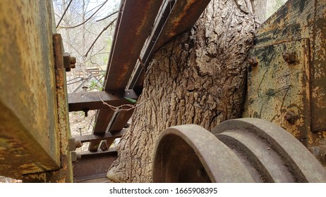 Old Mining Railway Gear and Rails with Tree Growing Around  It