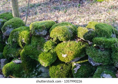 Old moss covered dry stone wall in a swedish nature reserve
