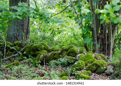 Old moss covered dry stone wall in a lush greenery in a nature reserve on the island Oland in Sweden