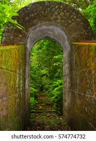 Old mossy bridge with vegetation near Monteverde, Costa Rica
