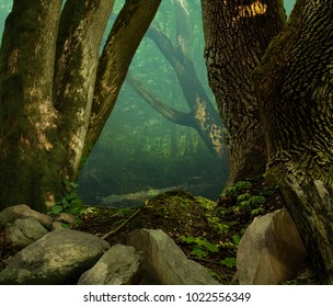 Old mossy oak trees and stones in ancient shady celtic forest with blue haze
