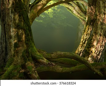 Old mossy trees, crooked roots, branches in sunshine