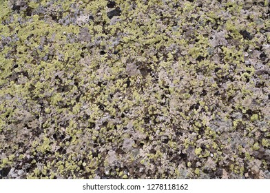 Old mountaine stone texture background dirty rock surface covered with lichen.