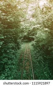 Old narrow-gauge railway in summer forest.