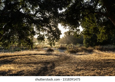 Old oak trees in early morning light near Chatsworth Park South in the San Fernando Valley area of Los Angeles, California.