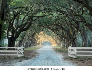 Old oak trees line a gravel road in Savannah, Georgia