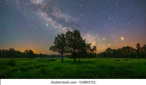 Old oaks under starry sky