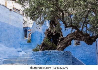 Old Olive tree in a street of Chefchaouen