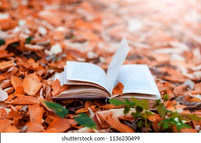 old open book in the park in colorful autumn leaves