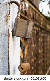 Old open padlock with key inside hangs on a fence covered with rust