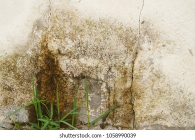 An old outside wall is dirty and wet.