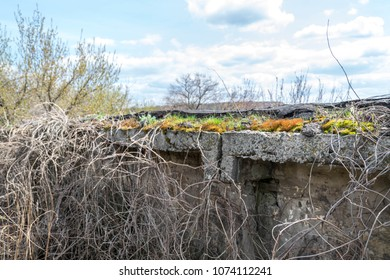 The old, overgrown fortifications, the fortification