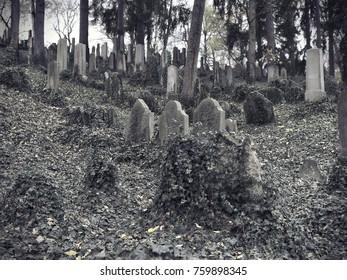 Old overgrown Jewish graveyard in Trebic, Czech Republic