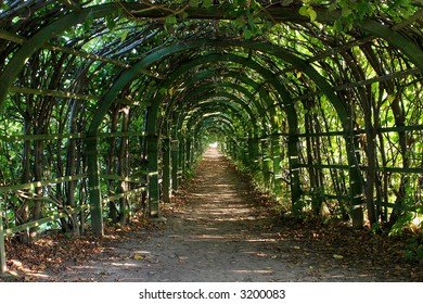 Old overgrown with leaves pergola on sunny day.