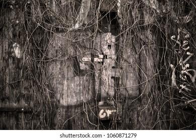 Old overgrown locked door