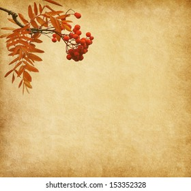 Old paper with the berries of a Rowan tree.