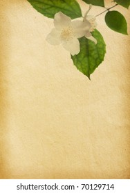 old  paper textures with jasmine blossom