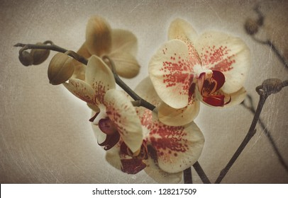 Old Paper Vintage Background With Orchid. With Scratches