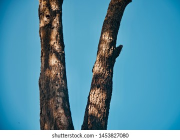 An old parts of tree with blue sky background photo