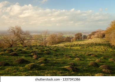 Old pasture with ant hills near Willersey, Cotswolds, England