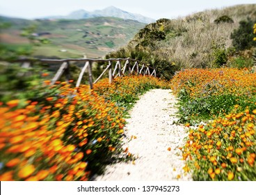 old path surrounded by spring flowers