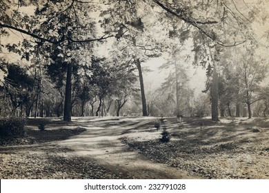 Old photo of the forest