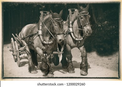 old photo with horses