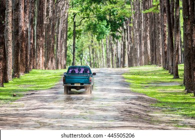 old pickup truck running on gravel road in pine forest