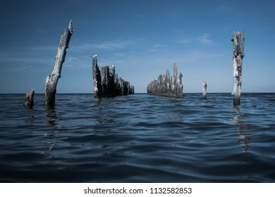 Old piles of berths in the sea