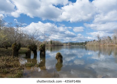 Old pilings along backwater of tidal river in winter.  Chehalis River Olympic Peninsula