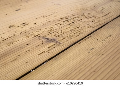 Old plank floor damaged by borer, woodworm