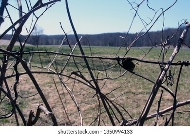 old praying mantis nest on wire fence with field and mountains in the background