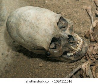 the old prehistoric skull of an alien. egg-like shape of the head. historical site, Science UFO, Zone 51