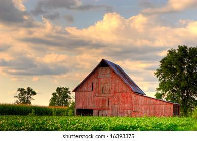 Old, red barn in corn field