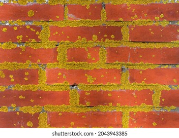 Old red brick wall covered in yellow moss. Abstract background und texture design. Conservation concept of natural monuments.