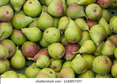 Old regional pear variety, called in Germany Stuttgarter Gaishirte or Birtele, in a box at a market stall on a farmer's market with regional products