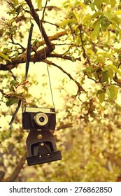 Old a retro the camera hangs on an apple-tree in sunny spring day. Toned image. Vertical