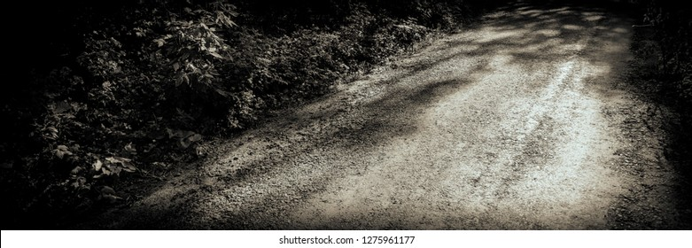 old road in the forest. Web banner. Summer season in the countryside. Landscape in monochrome tonality.