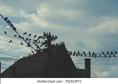 Old roof and birds, vintage concept, travel Europe Romania