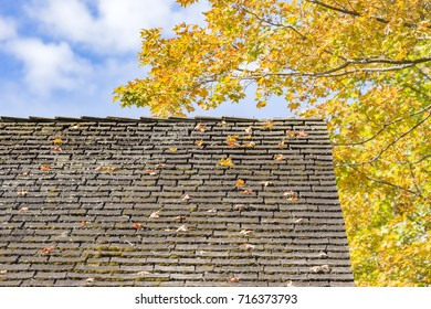 Old roof littered with autumn leaves falling from tree, blue sky with white clouds. Home maintenance concept