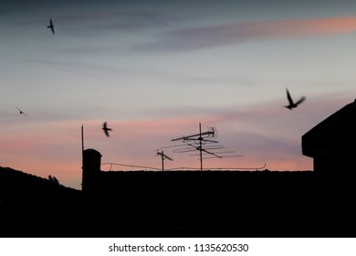 Old roof silhouette with antennas and birds flying around at sunset.