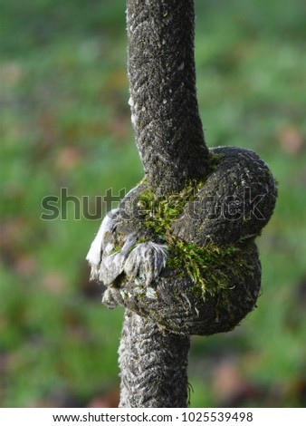 Old Rope Swing