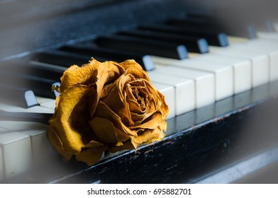 Old rose on old piano