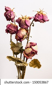 The old roses