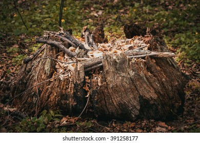 Old rotten stump with fallen leaves